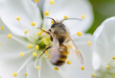 Foto pollen allergi Akaal Yoga nettkurs